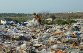 Woman working with waste at landfill in Senegal